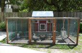 Agriculture urbaine : Élevage de poulets de basse-cour