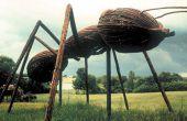 Comment se débarrasser des fourmis (Version extérieure)