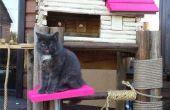 Palais de la chatte : conversion de birdhouse extrême