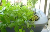 Solutions aux problèmes hydroponique (manque d'appui des plantes-racines)