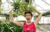 Plantes-araignées : Entretien facile & Durable comme on peut