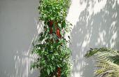 BRICOLAGE bio planteur Vertical