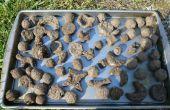 Comment faire un jardin instantanée en utilisant les boules de graines