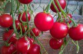 Conteneur petit balcon ou dans espace de jardinage