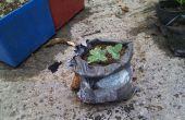 À l'aide de paquets d'expédition à cultiver des plantes