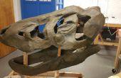 Faire un crâne de T-Rex à partir de zéro
