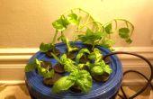 Faire des Copies de la vie de vos plantes préférées... Automagicallly