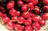 Cerisier clair de lune avec le sucre et la levure