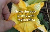 Enregistrer des engrais, votre poche, le monde et obtenir des plantes plus sains à l'aide de mycorhizes