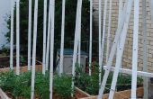 Tomate de piquets de clôture repurposed