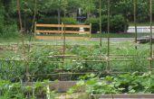 Treillis de bambou tomates