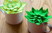 BRICOLAGE a estimé succulentes
