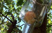 Comment faire pousser une pomme dans une bouteille