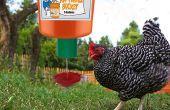 Alimenteur automatique de poulet