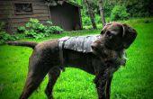 Armure de chien