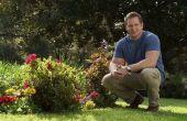 Pelouse de TruGreen printemps : Sentiment d'espoir