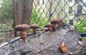Agriculture urbaine de champignons