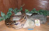 Sécurité et l'efficacité énergétique dans des enclos de grand reptile