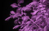Caméra infrarouge (voir dans l'obscurité)