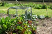 Comment faire une cage de protection végétale modulaire.