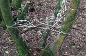 Cordon d'arbre-siège