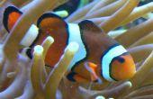 Comment reportion des aliments pour poissons congelés