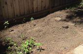 Comment faire pour démarrer un beau jardin