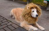 Costume de chien lion
