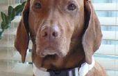 Comment faire un collier de chien réglable