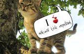 Répulsif tique pour chats naturel