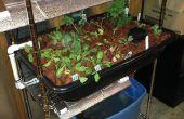 Projet de culture aquaponique Starter de garage