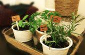 Jardin d'herbes aromatiques Indoor mini