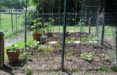 Mon jardin 2011