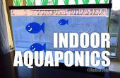 Aquaponique intérieur