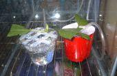 Dirt Cheap intallations clonage système pour plantes