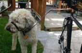 Un vélo plus sûrs et peu coûteux de Doggy Walker