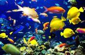 Comment dessiner un poisson sous l'eau