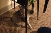 Chat & souris jouent jouet