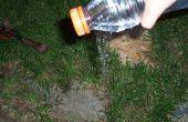 Bouteille d'eau du bec