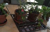 Pots et plantation d'herbes pour les débutants
