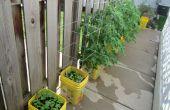 Arrosage automatique jardin conteneur