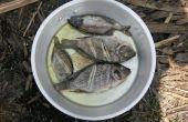 Manger les espèces envahissantes : Zambien Pan Fried Tilapia
