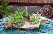 3 manières d'attacher des plantes succulentes de bois flotté pour les faire croître