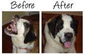 Donner votre médicament chien sans rechigner