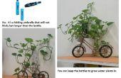 La culture de plantes d'intérieur ?