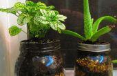 Pot de plantes