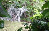 Géant venimeux éteinte Arachnid - trouvé qui survivent en Australie