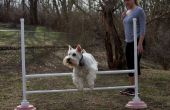 Jump portable Dog Agility Bar