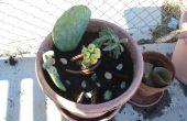 Comment faire un Container de Cactus jardin