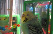 Jouet de Bird LED couleur changeante !